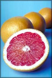 Pink grapefruit cut in half.