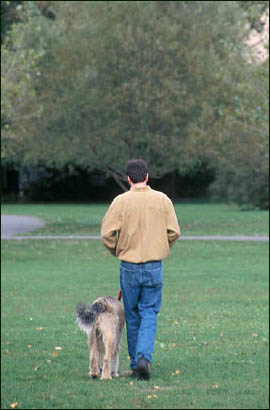 Exercise is also good for your liver: Man walking his dog in a park.