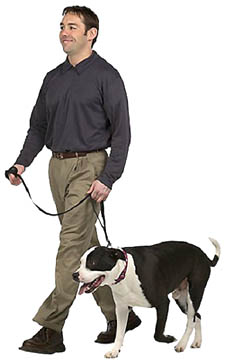 Moderate exercise for a achieving a happy healthy liver. Picture of a man with his dog our for a walk.