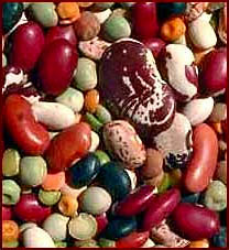 Picture of different kinds of beans. Beans are a rich protein source and is healthy for your liver.