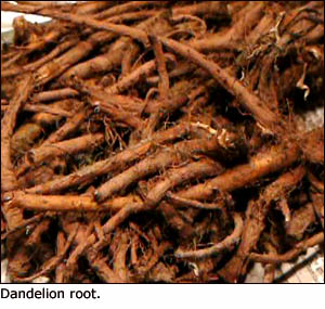 Dandelion root is a good liver cleansing herb that can be used in teas.