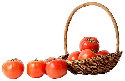 Tomatoes are a source of food in your liver diet: Picture of lush red tomatoes in a basket.